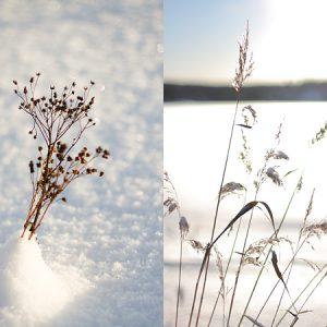 Vinter-vitt